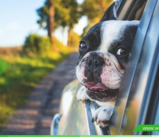 here are the top dog food secrets