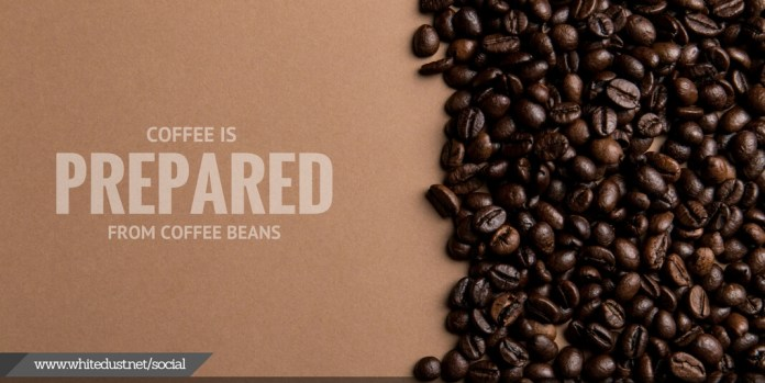 how coffee is made