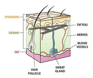 tattoo ink skin level