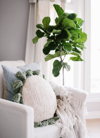 Meet Lola – How To Care For Fiddle Leaf Fig Trees