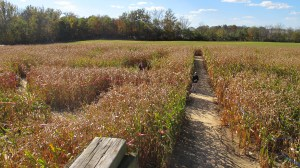 Corn Mazes. 10 Fall things that make me Happy. What makes you happy in the fall?