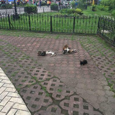 urban cats