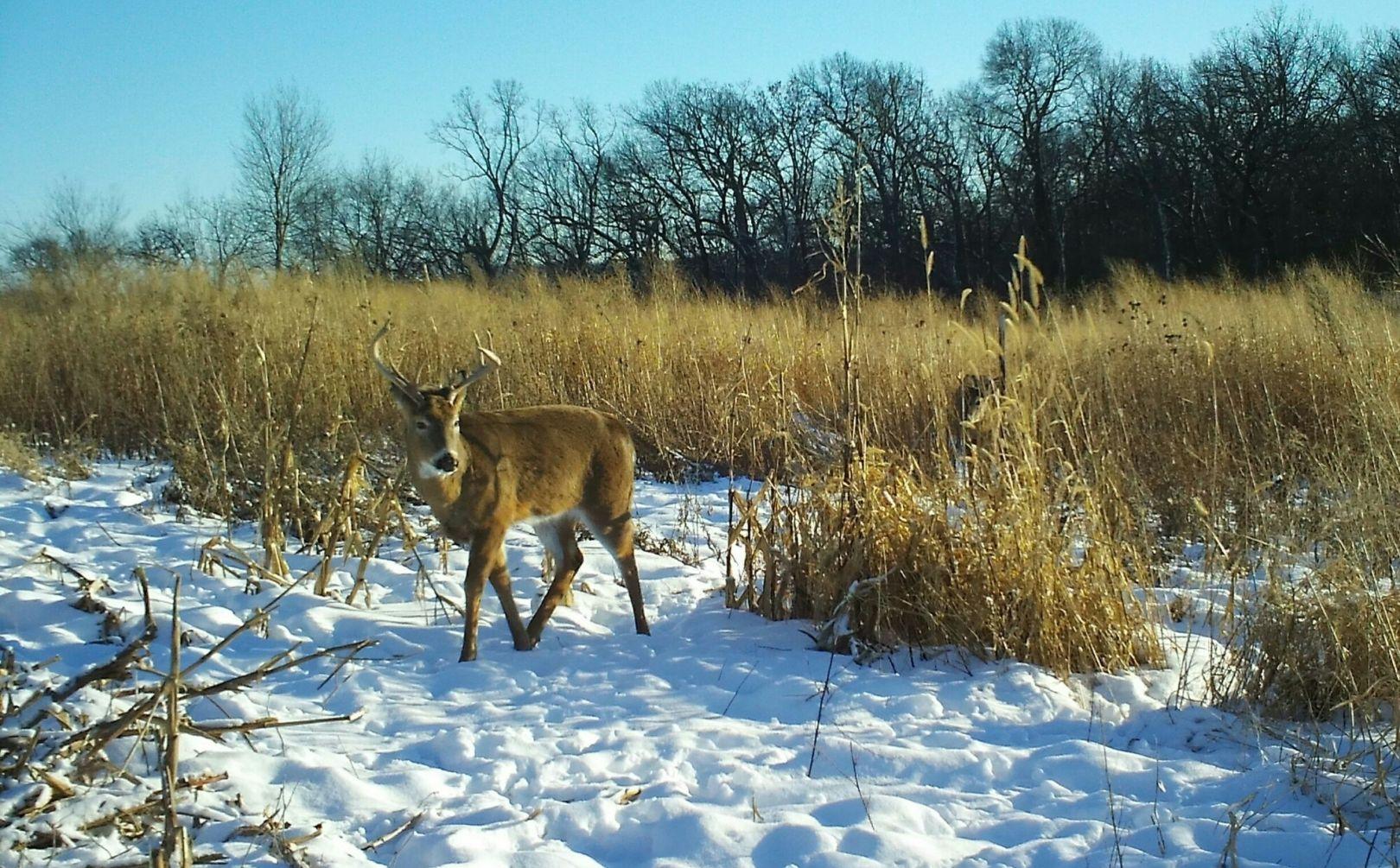 Creating Whitetail Habitat Quickly