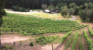 Whitetail Ridge Vineyards