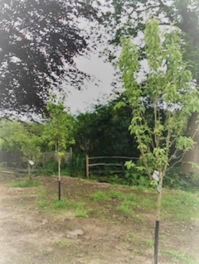 FullSizeRender4004 - New Beginnings in the Garden