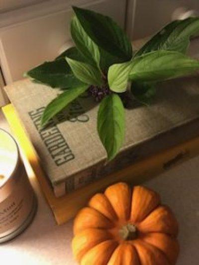pumpkins 11 e1505808261436 225x300 - Autumn a season of natural beauty and colour