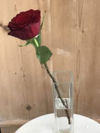 single red rose 2 e1505978725215 225x300 - The Rose - Vintage and Thrifty Styling for the Home