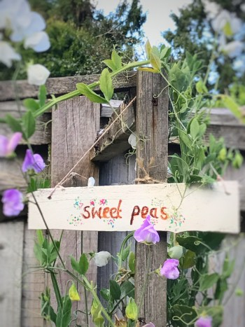 sweetpeas sign 225x300 - Flowers - Vintage and Thrifty Styling for the Home