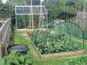 TOD vegetable patch 1 300x225 - Renovate and Build - One step closer and a look back in time