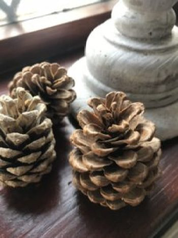 pine cones on window sill e1508335556205 225x300 - Autumn Decor - Decorating a Mannequin and a Pumpkin Obsession
