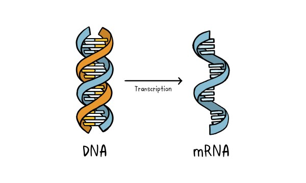 Vaccines Topics Four images working 05 DNA RNA v2