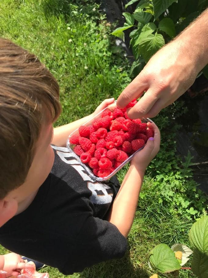 Foodie travel with kids: Picking Raspberries