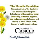 Dandelion flowers also feed bees Dont poison or pull themhellip