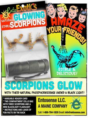 Scorpions Glow Kit For Sale