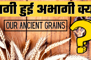 Ragi – Finger Millet – Our Ancient Grains