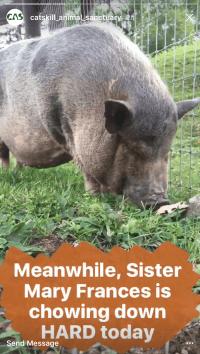 catskill animal sanctuary instagram story