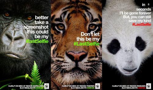 World Wildlife Fund LastSelfie Campaign