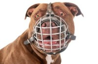 Are Muzzles Bad for Dogs