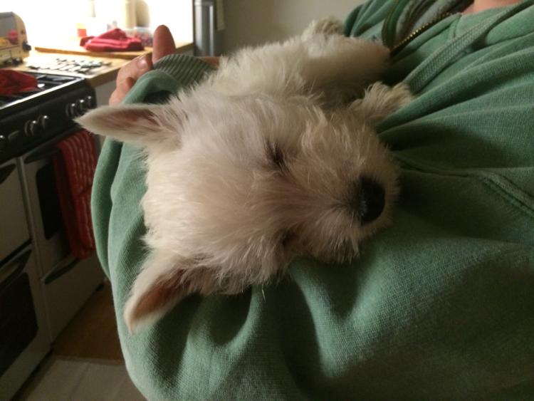 teddy4