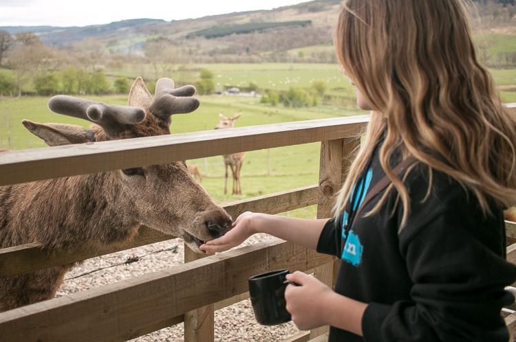 highland safaris review