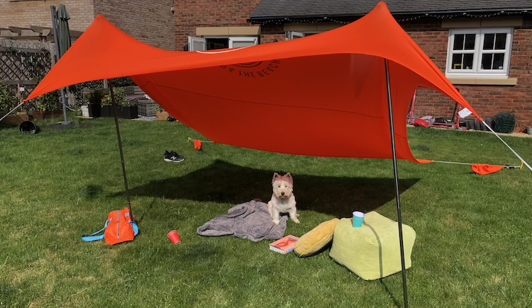 win sunshade competition