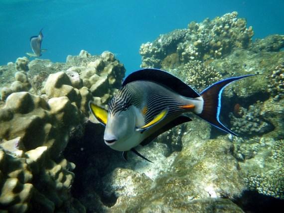 Marine life in Marsa Alam via pixabay