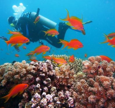 Diving holidays in Egypt via Pixabay