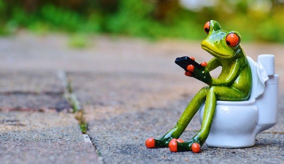 frog sitting on a toilet via pixabay