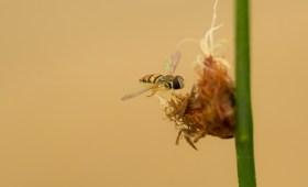 Tiny Bee on a Tiny Flower