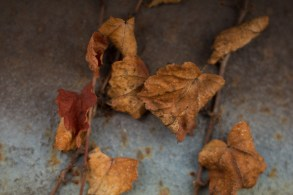Rusted Leaves