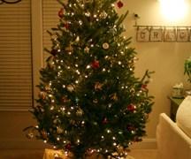 Wordless Wednesday – Oh Christmas Tree, Oh Christmas Tree!