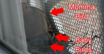 Trials & Tribulations of Nesting