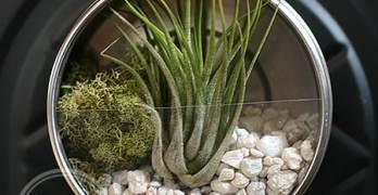 Getting Crafty with the Darby Smart Mini Terrarium DIY Kit
