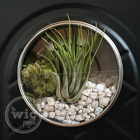 Darby Smart Mini Terrarium Tin