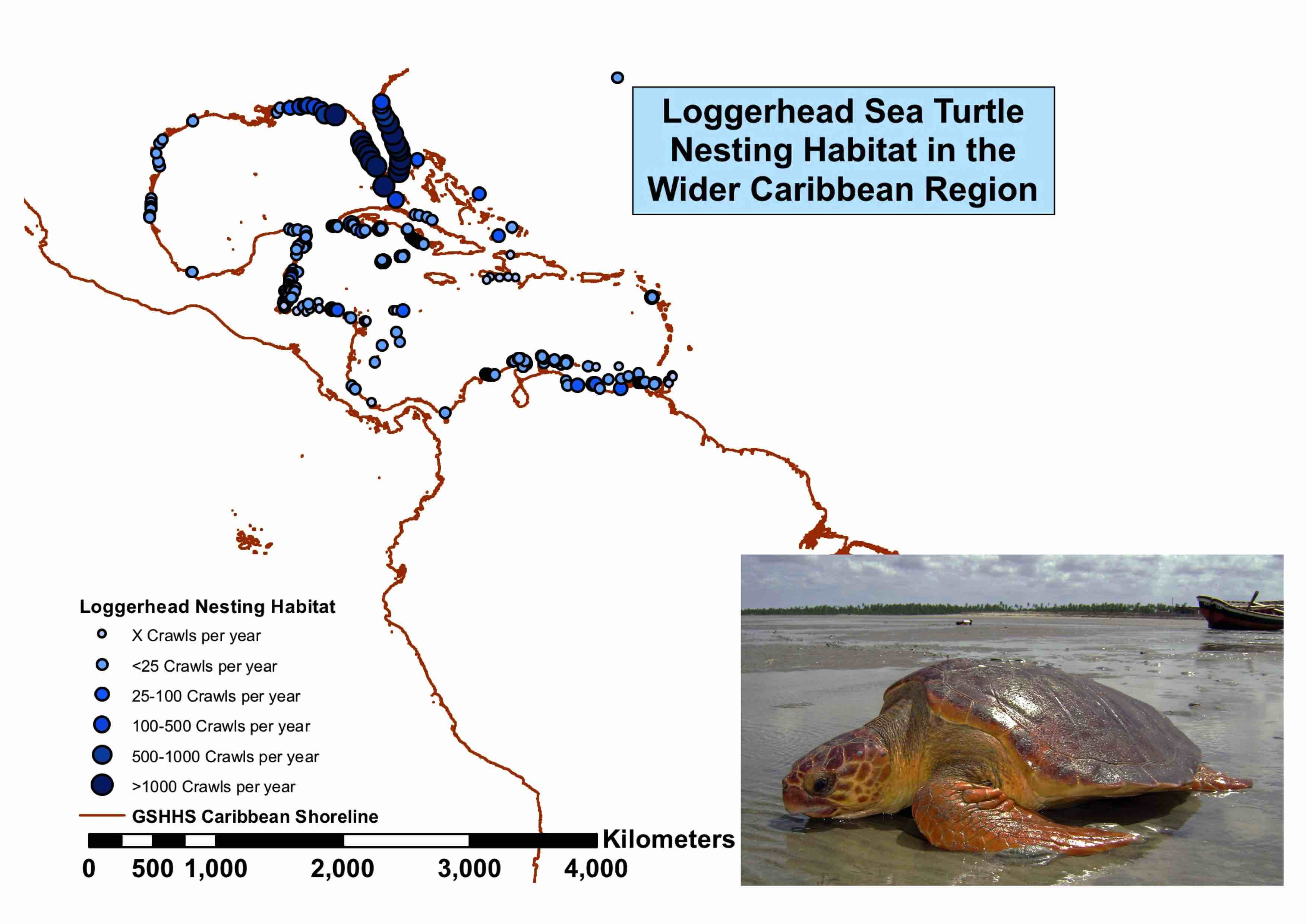Loggerhead Population Trends