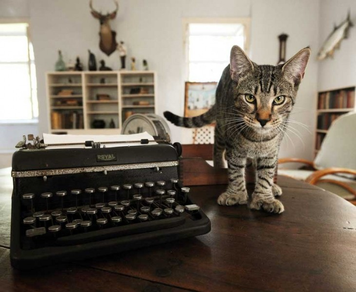 polydactyl cat on table with typewriter