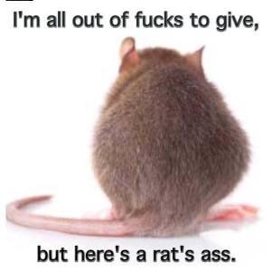rats ass