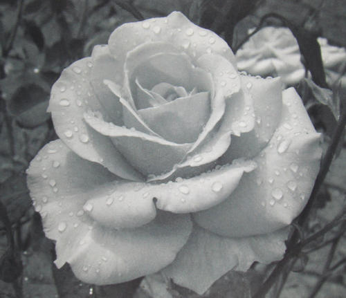 Naildesign Anleitung 3d Gel Blumen Feilen Malen