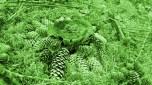 mandala sehr grün