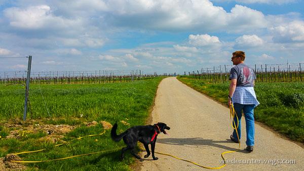 Wonneviertel Weinviertel Mai 2015 (28 von 39)