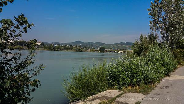 Donauinsel Hundebaden August 2015 (2 von 11)