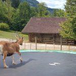 Top Ausflug: Tierpark Buchenberg – echt viel Natur.