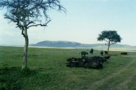 Kenia wiederunterwegs