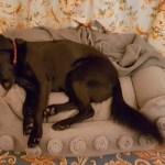 Video: Mit Hund im Bristol Wien