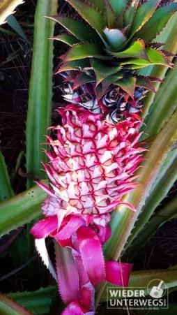 mauritius_2016_lakaz-chamarel_tamassa_lux_web-226-von-478