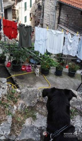 Montenegro Tipps Kotor Lovcen_WEB (81 von 448)