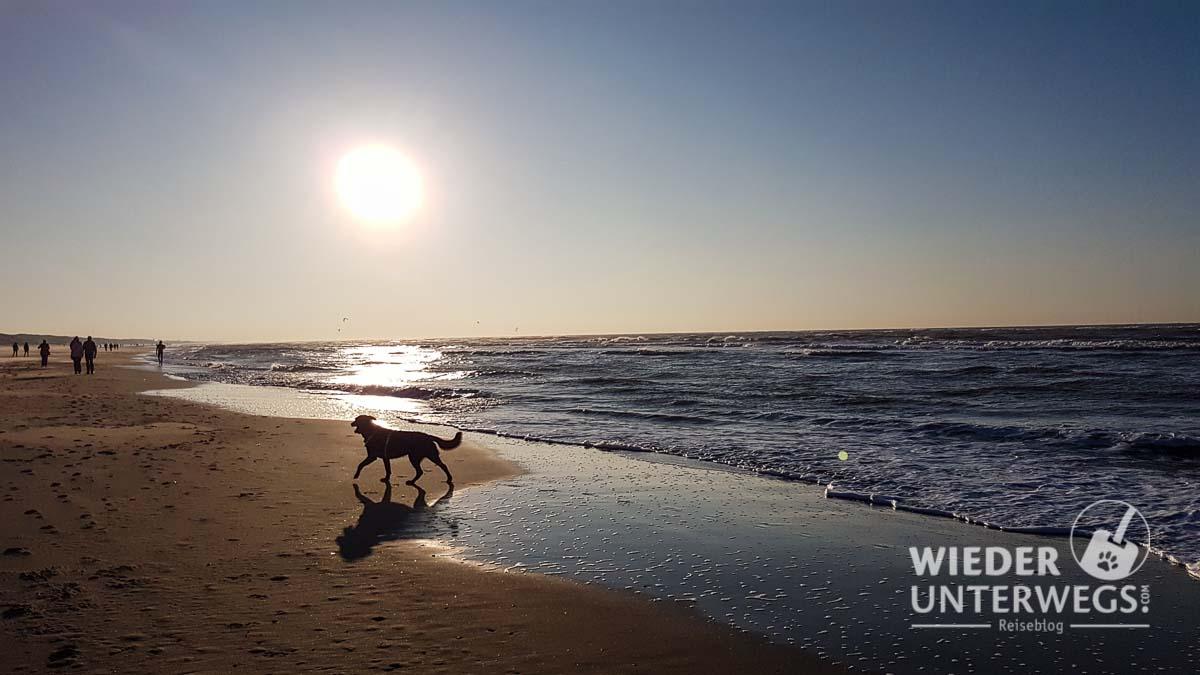 """""""Leine los!"""" in Holland - Mit Hund am Strand von Noordwijk."""