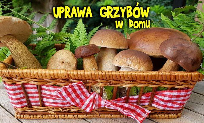 Uprawa grzybów w domu, uprawa boczniaków, uprawa pieczarek, shiitake