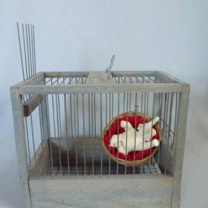 Cage bois, matériaux divers, grès engobe porcelaine