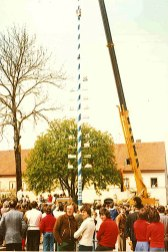 Der 1. Maibaum in Wifling steht